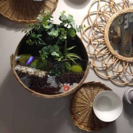 Terrarium réalisé avec boite à chapeaux et plexiglas + thé, café, sucre et végétaux.