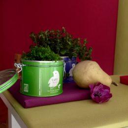 Pots de succulentes dans boites à thés